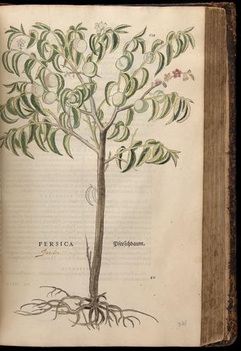 Image of Fuchs-1542-601