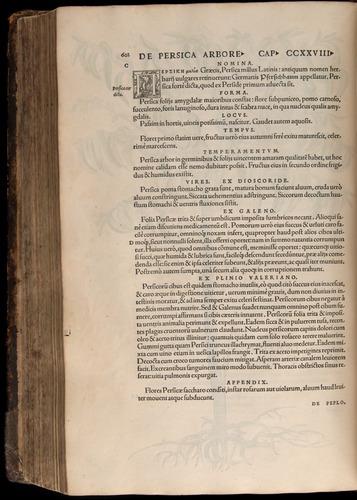 Image of Fuchs-1542-602