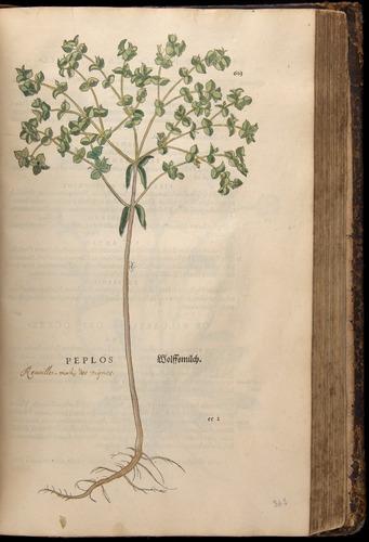 Image of Fuchs-1542-603
