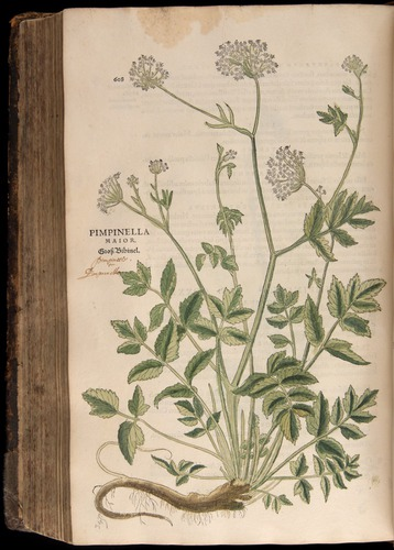 Image of Fuchs-1542-608