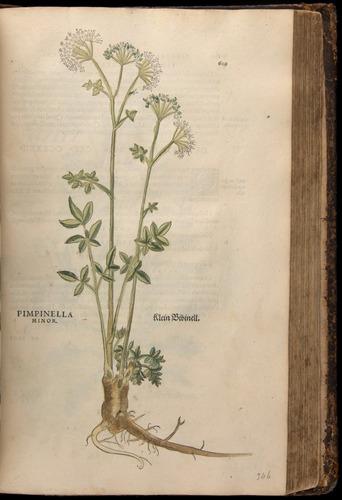 Image of Fuchs-1542-609