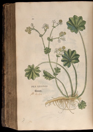 Image of Fuchs-1542-612
