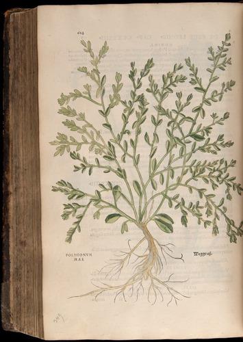Image of Fuchs-1542-614