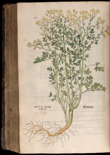 Image of Fuchs-1542-616