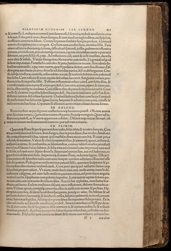 Image of Fuchs-1542-617
