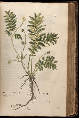 Image of Fuchs-1542-619