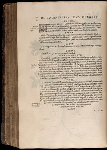 Image of Fuchs-1542-620
