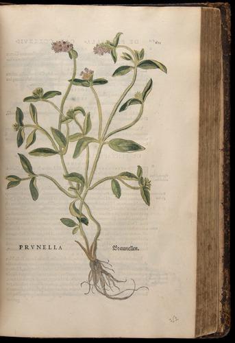 Image of Fuchs-1542-621
