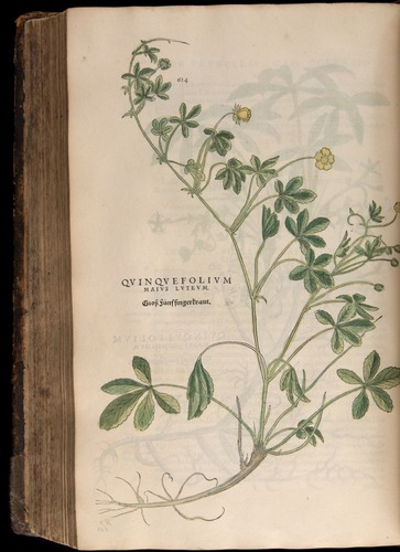 Image of Fuchs-1542-624