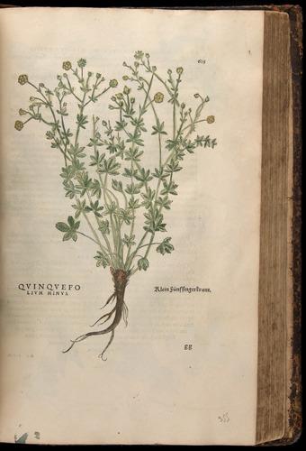 Image of Fuchs-1542-625