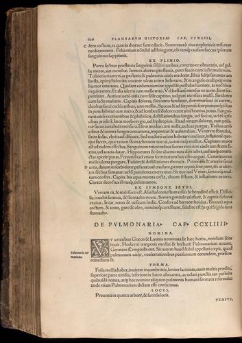 Image of Fuchs-1542-636