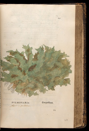 Image of Fuchs-1542-637