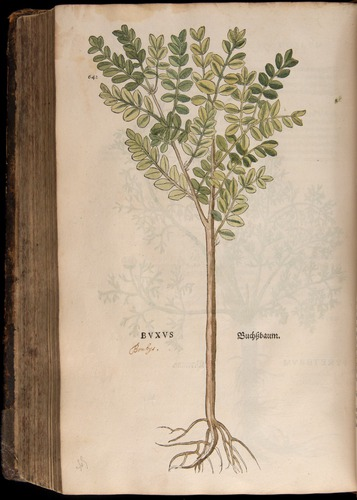 Image of Fuchs-1542-642