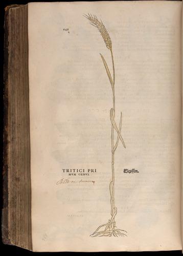 Image of Fuchs-1542-648