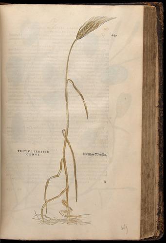 Image of Fuchs-1542-649