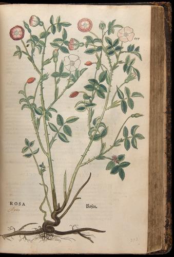 Image of Fuchs-1542-657