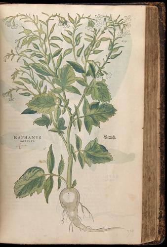 Image of Fuchs-1542-659