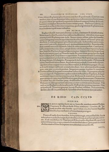 Image of Fuchs-1542-662