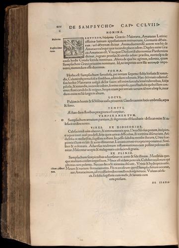 Image of Fuchs-1542-666