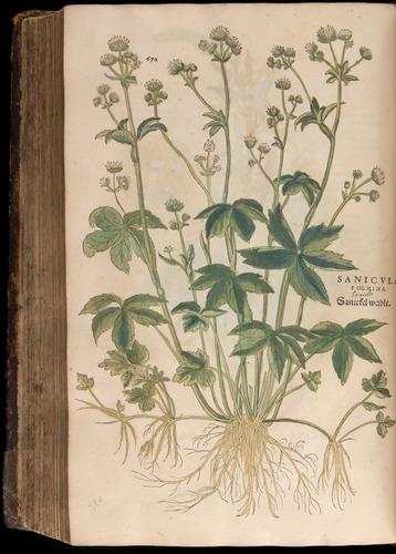 Image of Fuchs-1542-670