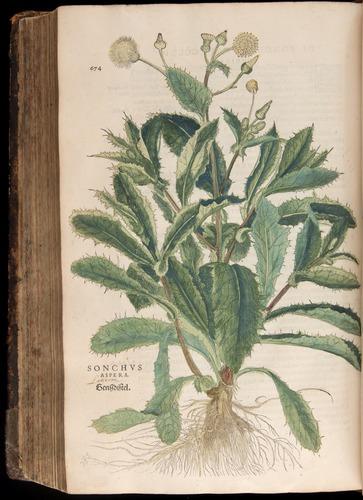 Image of Fuchs-1542-674