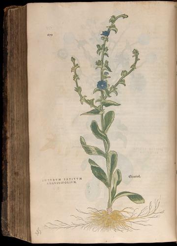 Image of Fuchs-1542-678