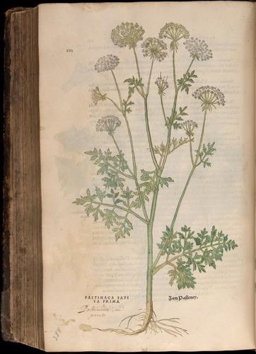 Image of Fuchs-1542-682