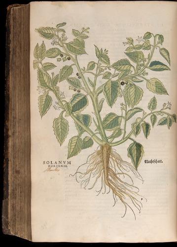 Image of Fuchs-1542-686