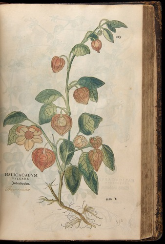 Image of Fuchs-1542-687
