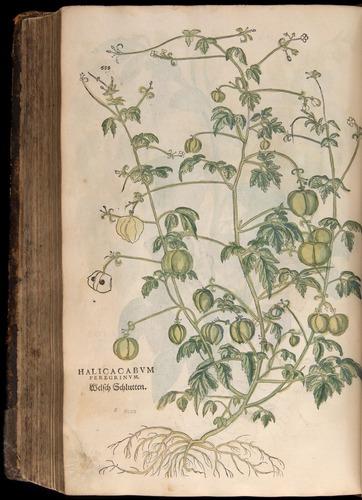 Image of Fuchs-1542-688