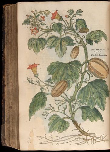 Image of Fuchs-1542-698