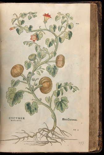 Image of Fuchs-1542-699