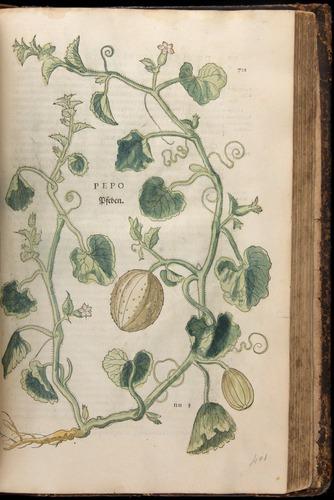 Image of Fuchs-1542-701