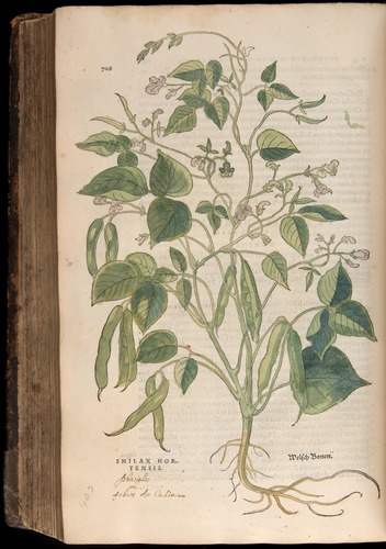 Image of Fuchs-1542-708