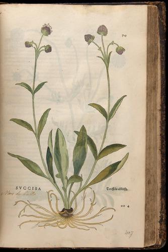 Image of Fuchs-1542-715