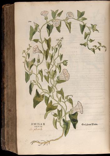 Image of Fuchs-1542-720