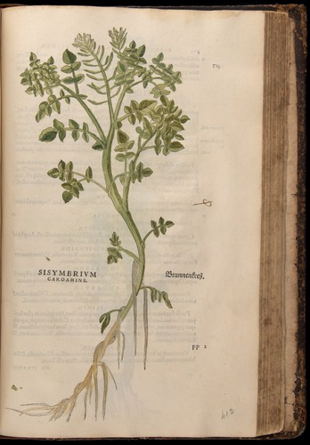Image of Fuchs-1542-723