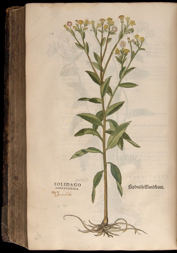 Image of Fuchs-1542-728