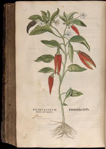 Image of Fuchs-1542-732