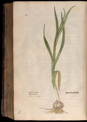 Image of Fuchs-1542-736