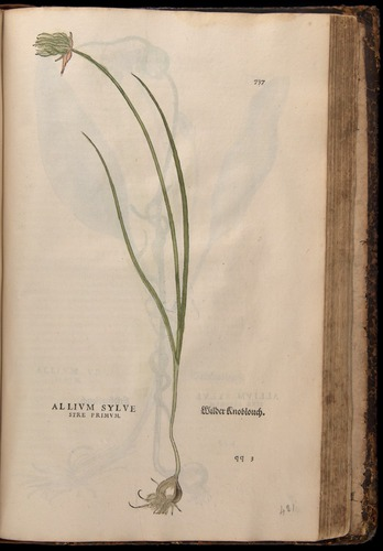 Image of Fuchs-1542-737
