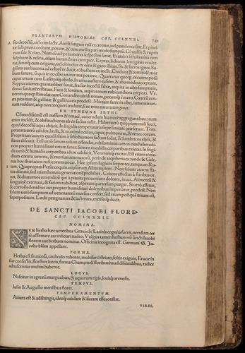 Image of Fuchs-1542-741