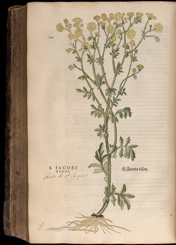 Image of Fuchs-1542-742
