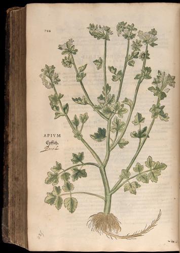 Image of Fuchs-1542-744