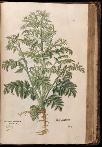 Image of Fuchs-1542-751