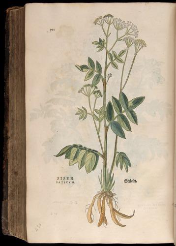 Image of Fuchs-1542-752