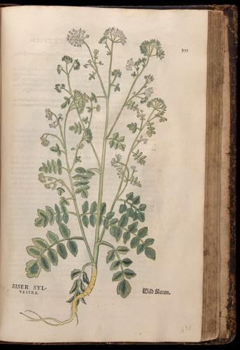 Image of Fuchs-1542-753