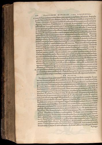 Image of Fuchs-1542-756
