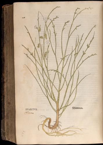 Image of Fuchs-1542-758
