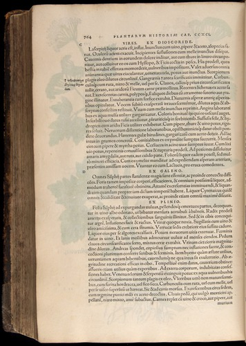 Image of Fuchs-1542-764